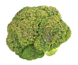 broccoli turning brown with age