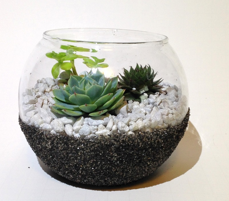 glass bubble bowl with succulents
