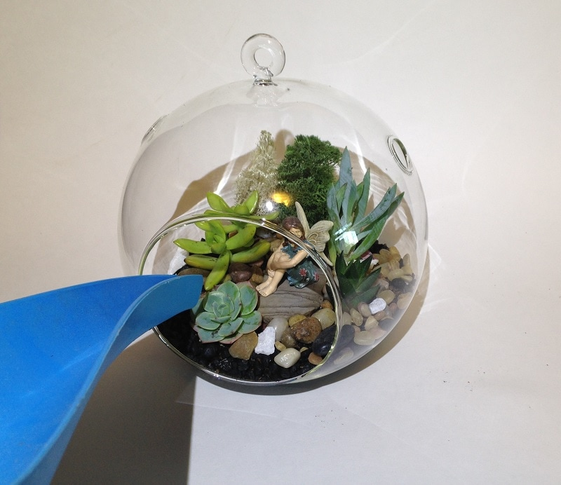 water terrarium with long spout watering can