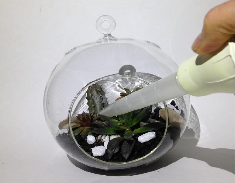 watering terrarium with turkey baster