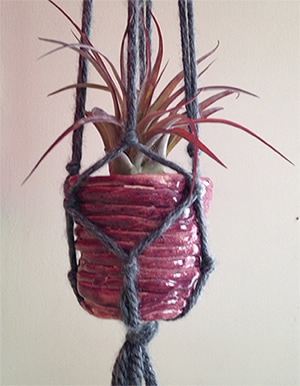 airplant in macrame hanger