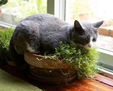 cat sitting in house plant