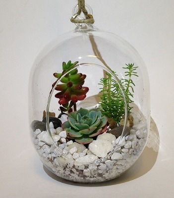 succulents in oval glass terrarium